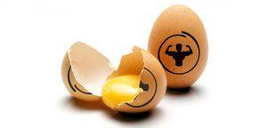 eggs in your diet